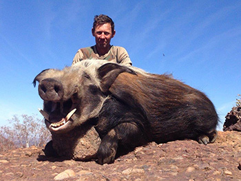 Trophy Bush Pig Hunt