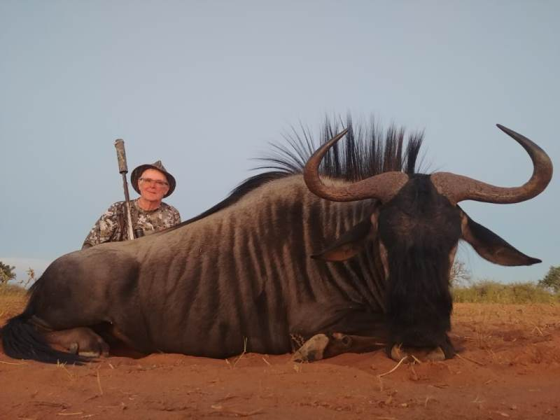 South Africa Blue Wildebeest